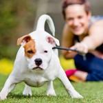 Terapia psicologica per gli animali