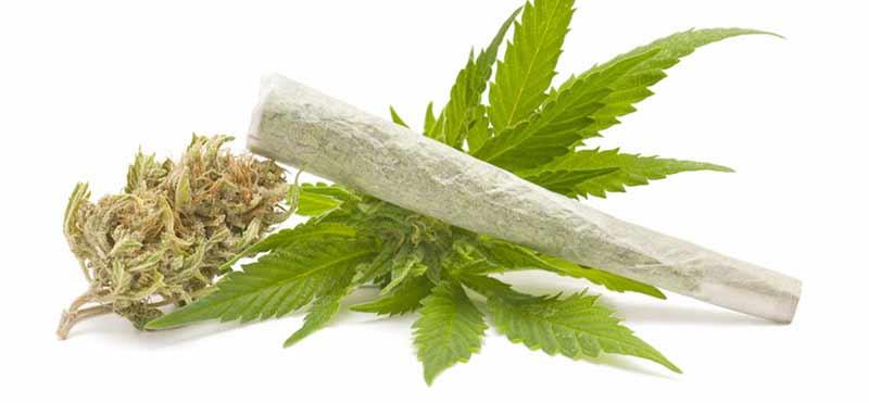 dipendenza da marijuana rischi e conseguenze