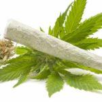 Uso di marijuana. Quanto è davvero pericoloso?